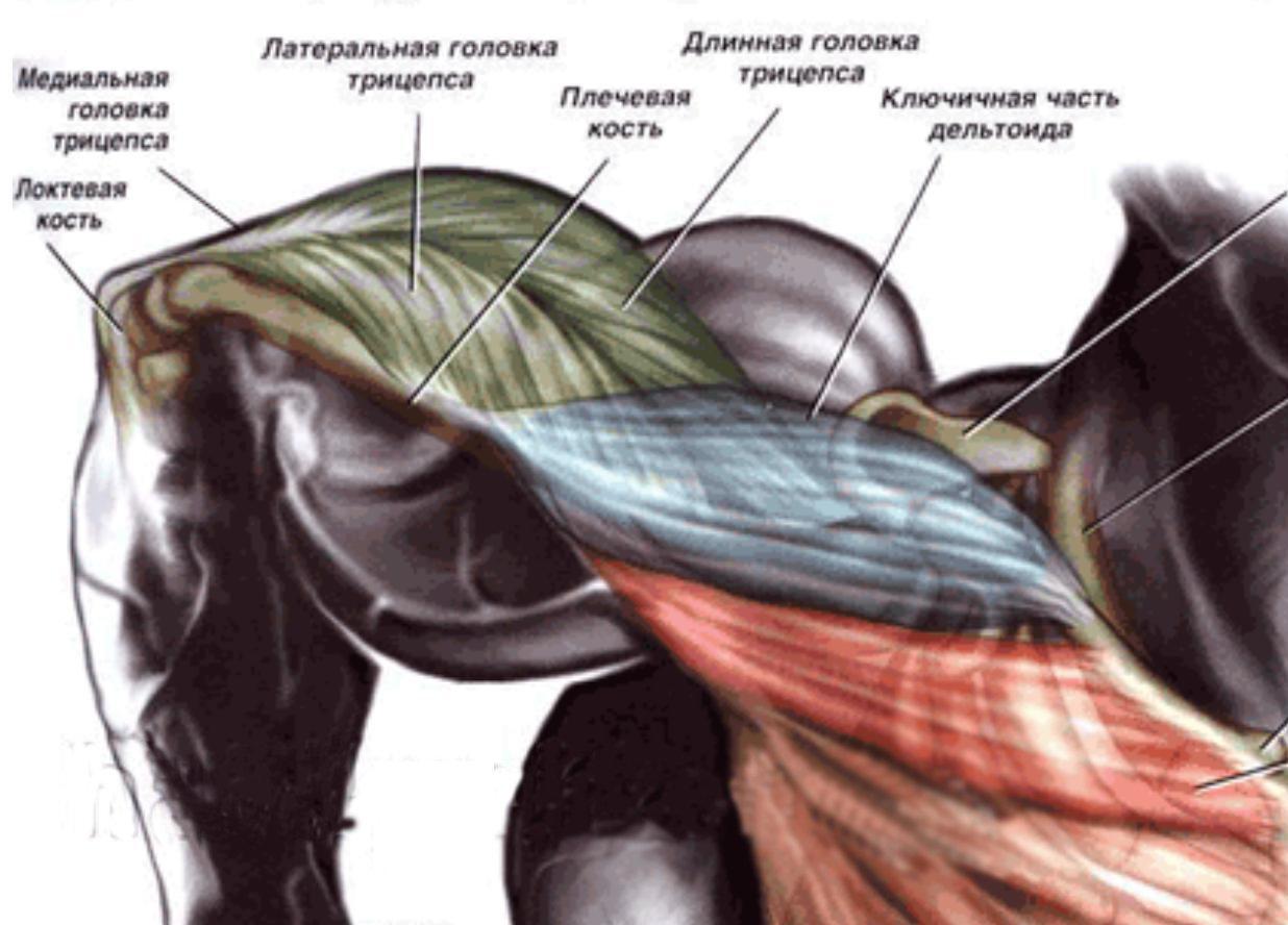 amorțeală a mușchilor și a brațului)