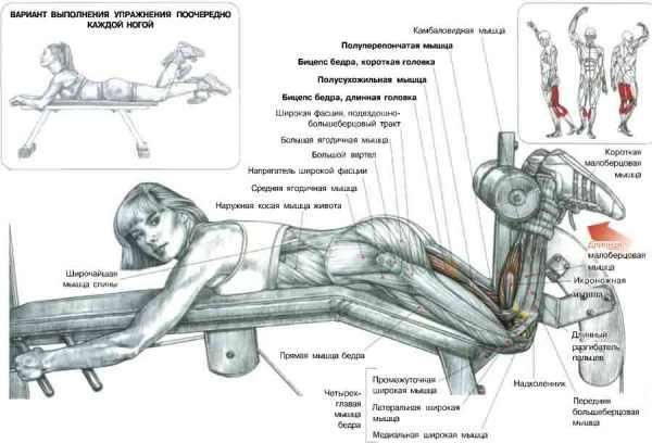 Какие мышцы работаю