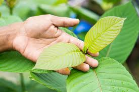 Kratom Is All Natural