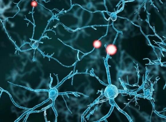 visualization of a neuron