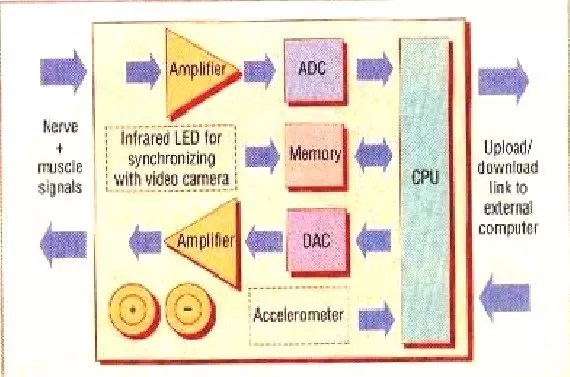 Neurochip functional block diagram