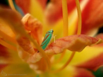 grünes Insekt auf orangener Blüte