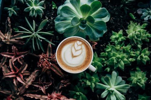 Cara Membuat Latte Art 1