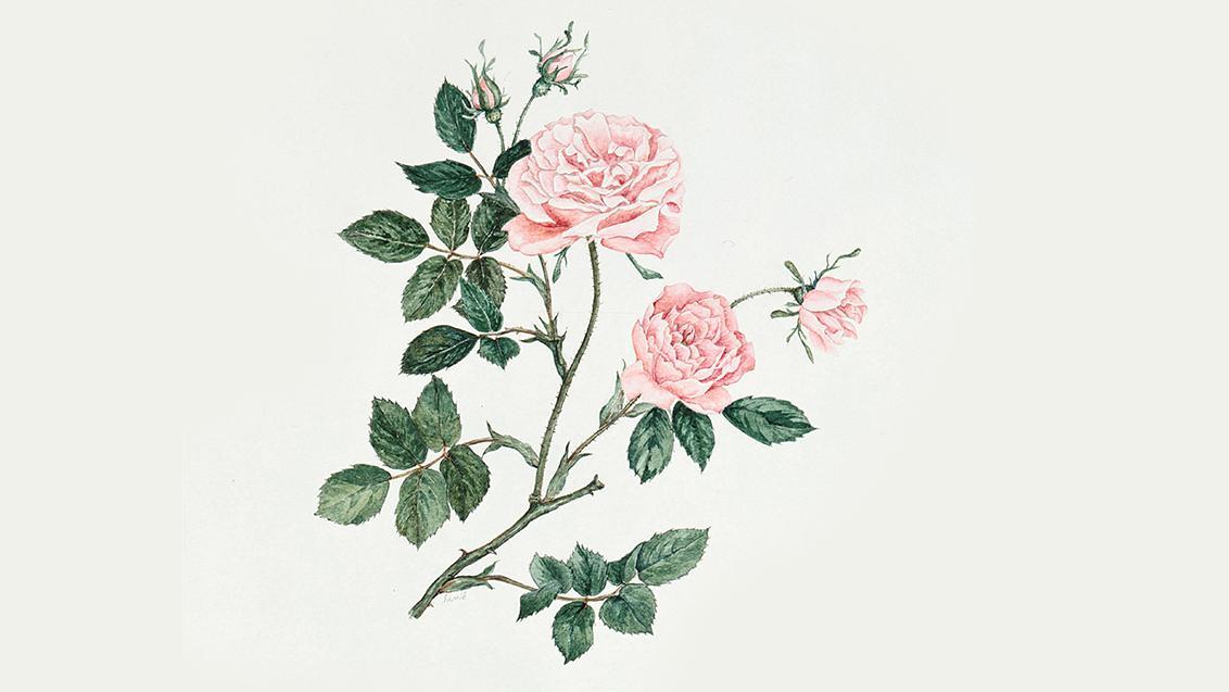 Bahasa bunga 2