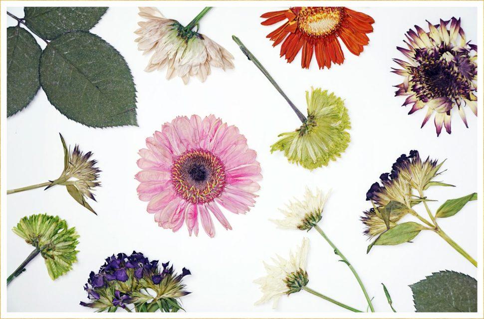 Apa Itu Pressed Flower