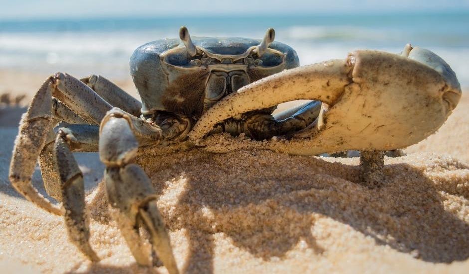 mengenal-crab-mentality