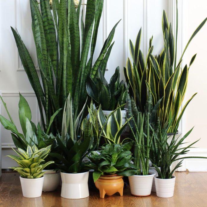 manfaat-tumbuhan-hias-hijau