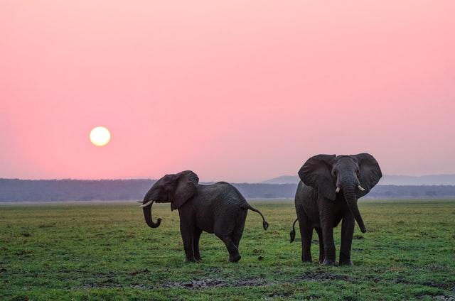 hewan-gajah