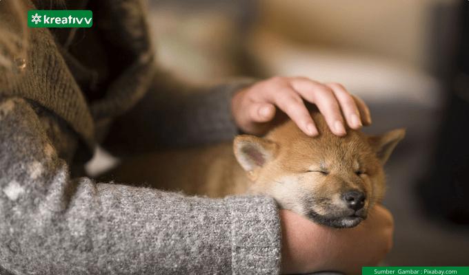 Anjing Jenis Apa Yang Paling Cocok Jadi Sahabat Baikmu