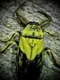 June bug 1