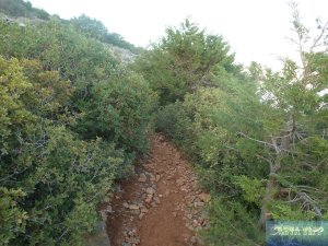 Pflanzenwelt auf Kreta