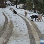Schnee auf Kreta 2017