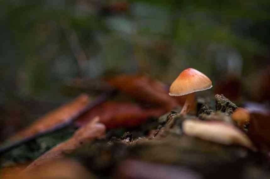 Kleiner Pilz ganz groß