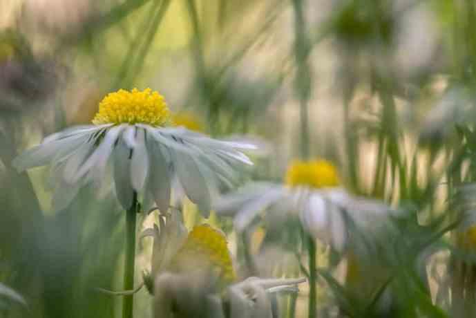 Inside the meadow, Flower Series ;-)