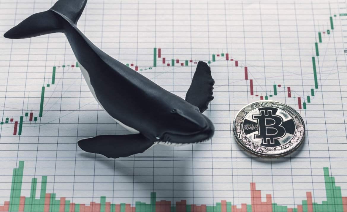 """Bitcoin'in Her Hamlesini Bilen Balina: Tarihin Görmediği """"Şok Dalgası"""" Geliyor! 5"""