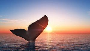 Santiment: Balinalar Bu Altcoin'den Eşi Görülmemiş Bir Oranda Alıyor!
