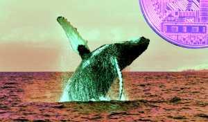 balinalar bu altcoin den gizlice stokluyor