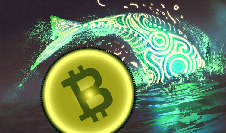 Balinalar Borsalara Bitcoin Yığıyor