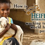 Heifer International Kini Terima Donasi Bitcoin