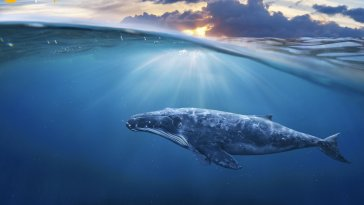 Bitcoin balinaları uyanıyor! Devasa BTC işlemleri başladı