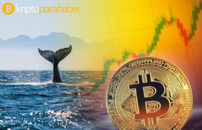 Bitcoin balinası