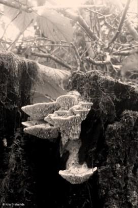 Mushroom II