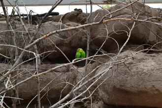 ABQ Zoo - 08-03 - 001