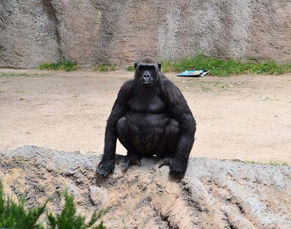ABQ Zoo - 08-03 - 004