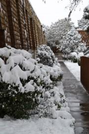 2015-02-28 snow 2