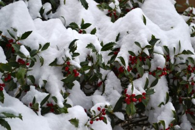 2015-02-28 snow 5