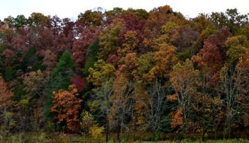 Kentucky Trees 6b