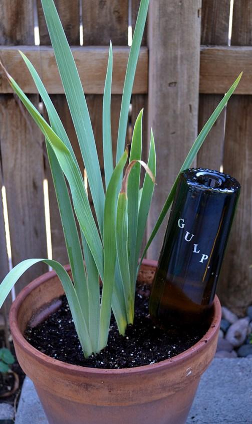DIY Wine Bottle Plant Feeder 2