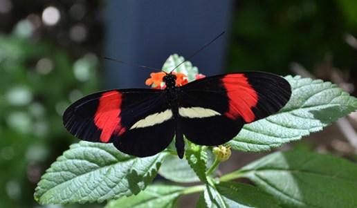 Butterfly 10B