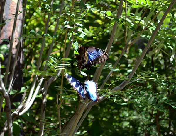 Butterfly 6B