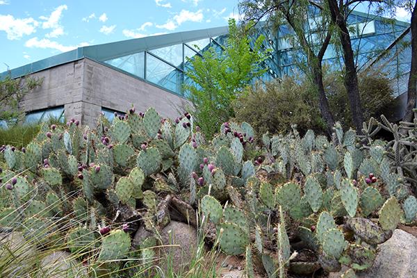 Cactus 2B