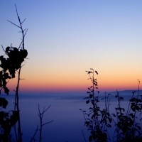 Fog and sunrise V