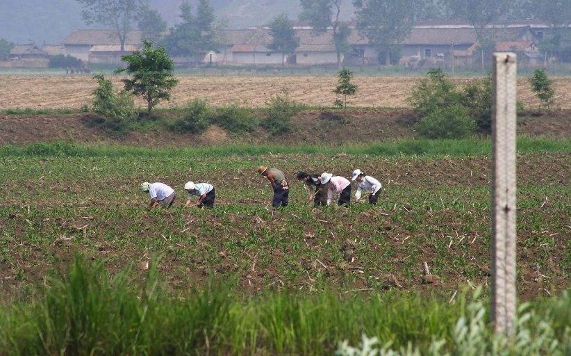 कोरियामा नेपालीले यसरी बगाउँछन पसिना (भिडियोसहित)