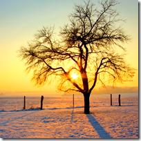 Sunshine in the winter