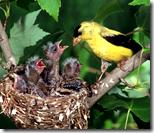 [bird's nest]