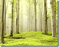 [forest with trees]