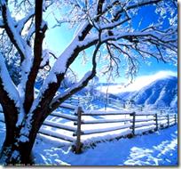 [cold winter]
