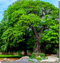 [desire tree]