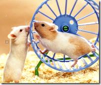 [Hamster running wheel]