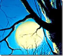[The moon through branches]
