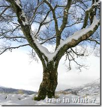 [tree in winter]
