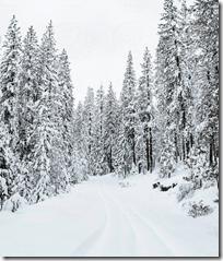 [snow on trees]