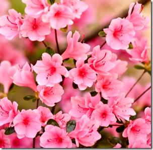 [spring flowers]