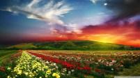 spellbinding_sunset-wallpaper-1920x1080