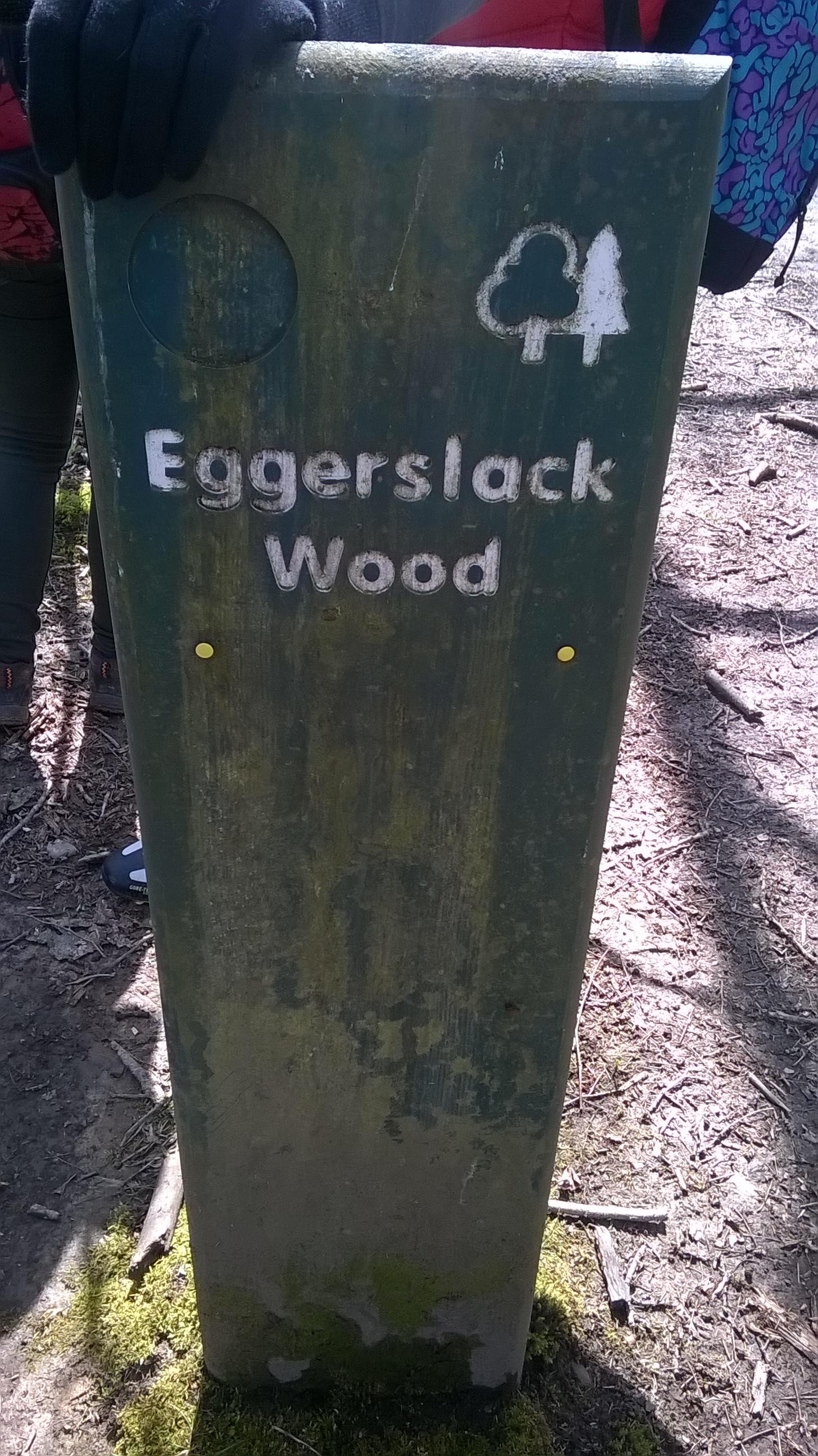 Atpakaļceļā ejam cauri šim senatnīgajam mežam
