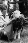 Romany Sheep